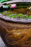 Water Lily in Dragon urn Stock Image