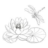 Water Lily and dragonfly. Stock Image