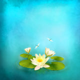 Water lily dragonfly painting background. Floral aquatic card with water lily and dragonfly painting. Abstract artistic background stock illustration