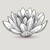 Water lily flower, hand-drawing. Vector illustration. Royalty Free Stock Image