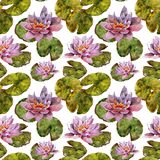 Water lily flower and leaves handmade watercolor seamless pattern. Gentle Stock Images