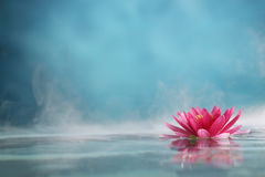 Water lily. Flowers blooming in water Stock Image