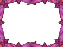 Water Lily Frame Royalty Free Stock Photos