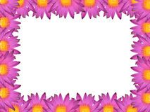 Water Lily Frame. The Beautiful Water Lily Photo Frame Royalty Free Stock Images