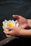 Water Lily in Girl Hands. Photo of a waterlily hold by a girl in her hands. The waterlilies can be found in the Danube Delta Royalty Free Stock Images