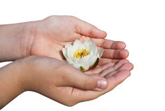 Water Lily in Girl Hands Royalty Free Stock Images