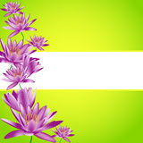 Water lily on green Stock Images