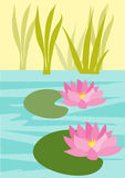 Water lily. An illustration of two pink water lilies in a pond surrounded by reeds Stock Photos