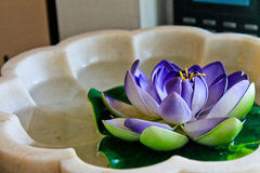 Water Lily. Interior design Spa, GOA, India Stock Image