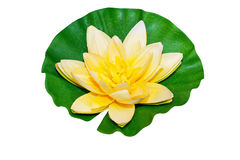 Water lily isolated Stock Photos