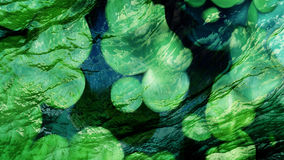 Water lily leaves. Textured background, unusual structure Royalty Free Stock Images