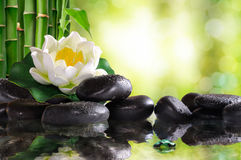 Water lily on lots of black stones reflected in water. In nature. With bamboo and green background bokeh. Concept of calm and relaxation. Alternative treatments Royalty Free Stock Image
