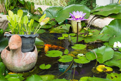 Water lily lotus flower with green leaves Stock Photos