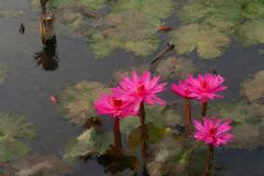 Water lily painting effect stock photo
