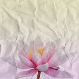 Water lily paper Stock Photography