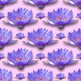 Water Lily pattern. Seamless pattern for design, Closeup from lotus flower Royalty Free Stock Photo