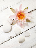 Water lily and pebbles. Water lily and white pebbles on white wooden background, top view Stock Photography