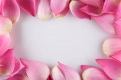 Water lily petals closeup. Macro image of lotus petals Stock Image