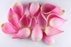 Water lily petals closeup. Macro image of lotus petals Stock Photography