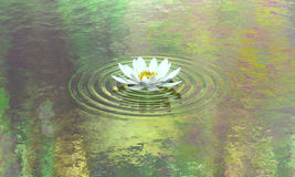 Water lily pond calm and purity. A lotus flower is blooming on lake with colourful reflections like one of Monet famous painting. Metaphor for peaceful mind Royalty Free Stock Image