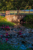Water lily pond outdoors in Tobago Caribbean bridge garden Stock Photo