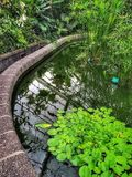 Water lily pond at Wellington botanic gardens with reflections Royalty Free Stock Images