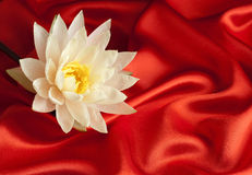 Water lily on red satin Royalty Free Stock Images