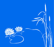 Water lily and reed Royalty Free Stock Photo