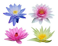 Water lily set Stock Image