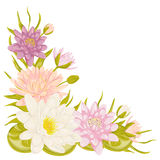 Water lily set. Collection decorative floral design elements for wedding invitations and birthday cards. Stock Photo