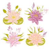 Water lily set. Collection decorative floral design elements  Royalty Free Stock Image