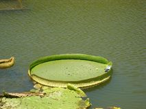 Water lily putuo china stock images