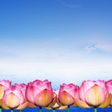 Water Lily on water and blue sky background Royalty Free Stock Photos