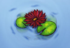 Water Lily (Zen Pictures, 2011) Stock Image