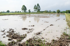 Water logged on field. Water on the clay that it will prepare to planting rice Stock Image