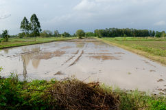 Water logged on field. Water on the clay that it will prepare to planting rice Royalty Free Stock Image