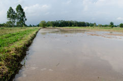 Water logged on field. Water on the clay that it will prepare to planting rice Stock Images