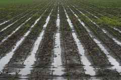 Water logged furrows in the field Royalty Free Stock Photography