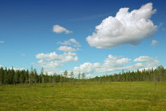 Water-logged Ground Of Finland Forest Stock Image