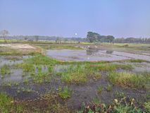 Water logged land for farming royalty free stock photography