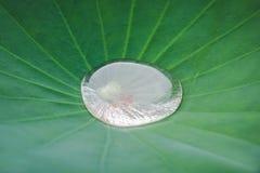 Water on lotus leaf royalty free stock photo