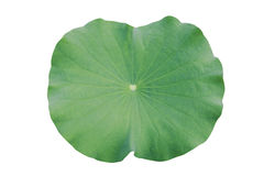 Water on lotus leaf stock image