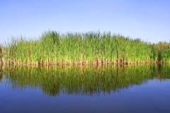 Water, mangrove en hemel Royalty-vrije Stock Foto's