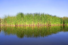 Water, mangrove and sky. View of a plantation of mangrove tree Royalty Free Stock Photos