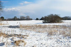 Water meadow under the light snow Royalty Free Stock Photography