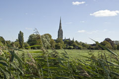 Water Meadows and Cathedral, Salisbury. View across the water meadows towards the medieval cathedral at Salisbury, Wiltshire royalty free stock photography