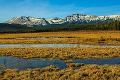 Water in the meadows on way to foothills. In clearwater county, Alberta, Canada Royalty Free Stock Images