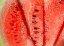 Water-melon. Juicy tasty pieces of a ripe water-melon Royalty Free Stock Photography