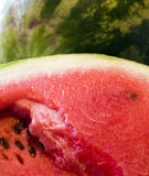 Water-melon. The cut and whole water-melon Stock Photography