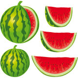 Water melon. Vector water melon isolated on white background Royalty Free Stock Photography